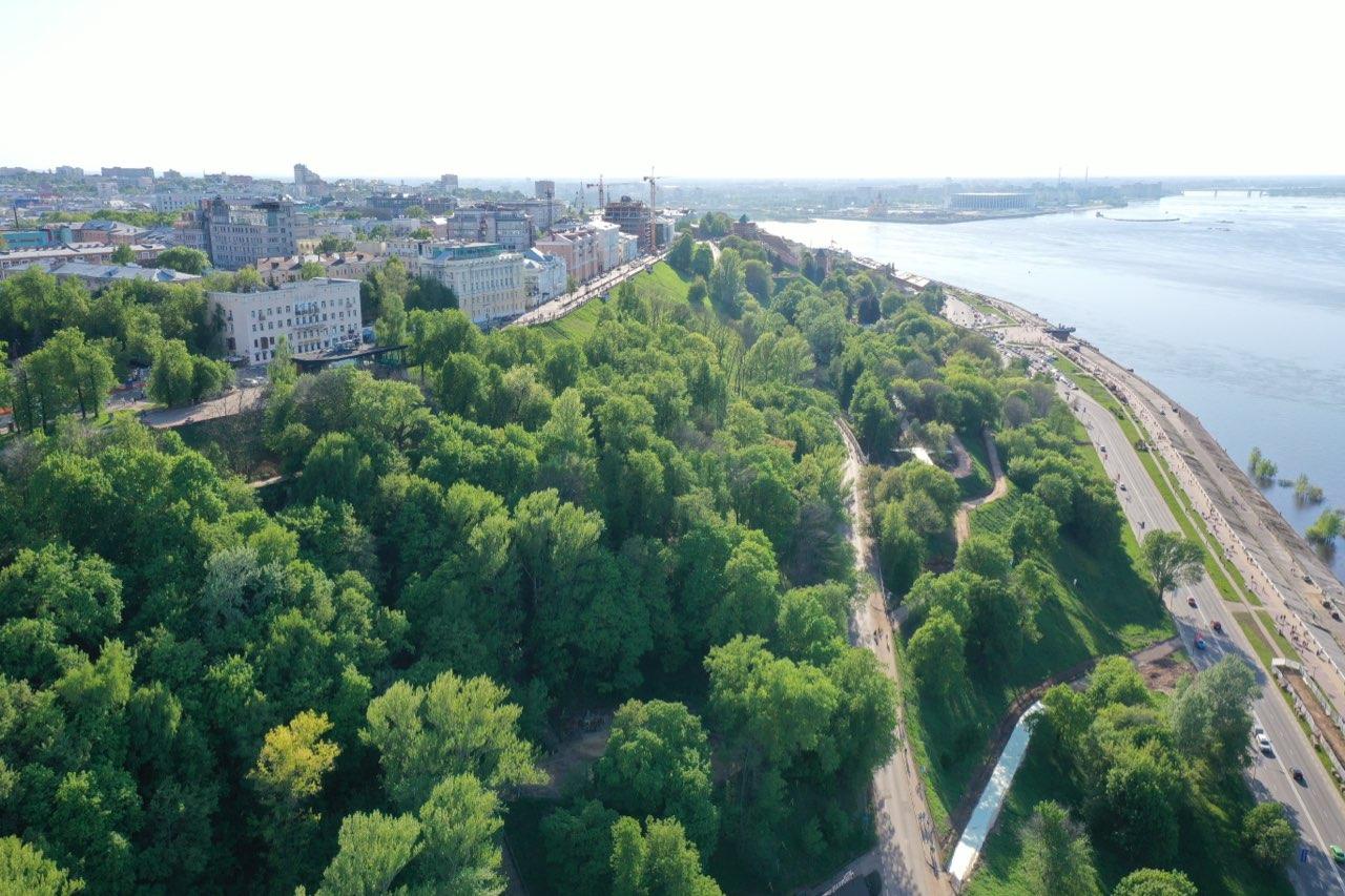 58 % лесов поставлено на кадастровый учет в Нижегородской области - фото 1